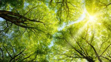 bomen met zon bewerkt